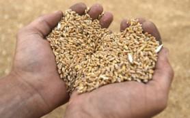 Росстат: сбор зерна в России по итогам 2014 года вырос на 12%