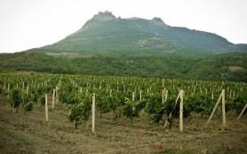 Виноградник в форме карты России заложили в Крыму