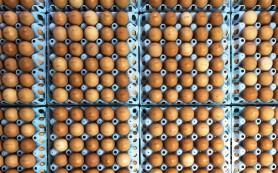 Россельхознадзор запретил транзит продукции птицеводства и живой птицы из США