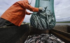 Российские рыбаки повезут рыбу через Фарерские острова, минуя санкционную Исландию