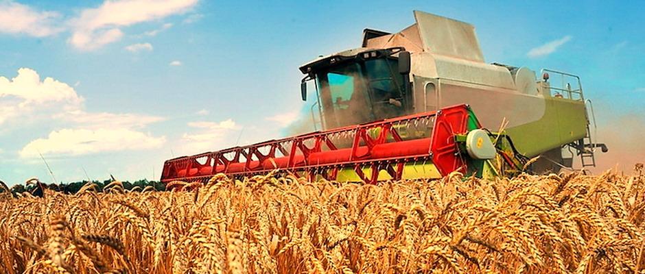 Сельское хозяйство как бизнес