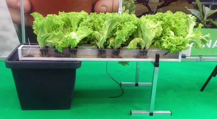 Гидропонные установки. Огород дома круглый год