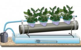Выращивание клубники на продажу способом гидропоники