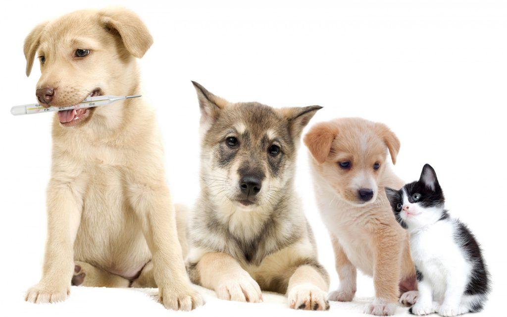 Особенности ветеринарной клиники «Био-Вет»