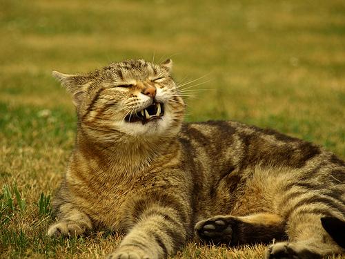 Если кошка чихает, то необходимо обратиться в клинику «Био-Вет»
