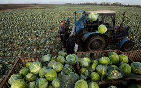 У аграриев нашлись «лишние» десять миллиардов