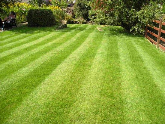 Привлекательность и целесообразность применения искусственного газона как альтернативы натуральному