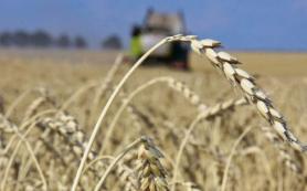 Анкара ввела квоты на пшеницу и масло из России