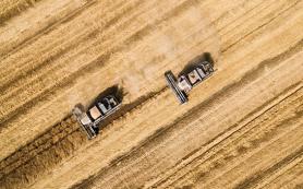 Аграриев Алтая могут лишить субсидий