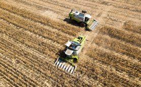 Индонезия разрешила поставки кукурузы и сои из России