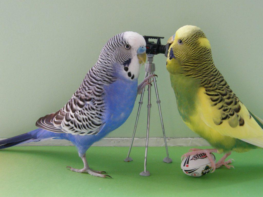 Что делать после покупки попугая