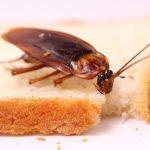 Как успешно избавиться от тараканов?