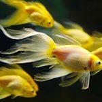 Как открыть бизнес по разведению аквариумных рыбок?