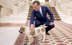 Президент Туркмении подарил Медведеву щенка алабая