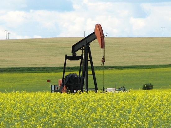 Нефтяники пожаловались на серьезные убытки после инцидента с «Дружбой»