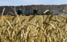 Минсельхоз спрогнозировал в 2020 году рост урожая пшеницы