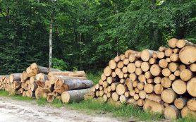 Почему мир потерял 43 млн гектаров леса