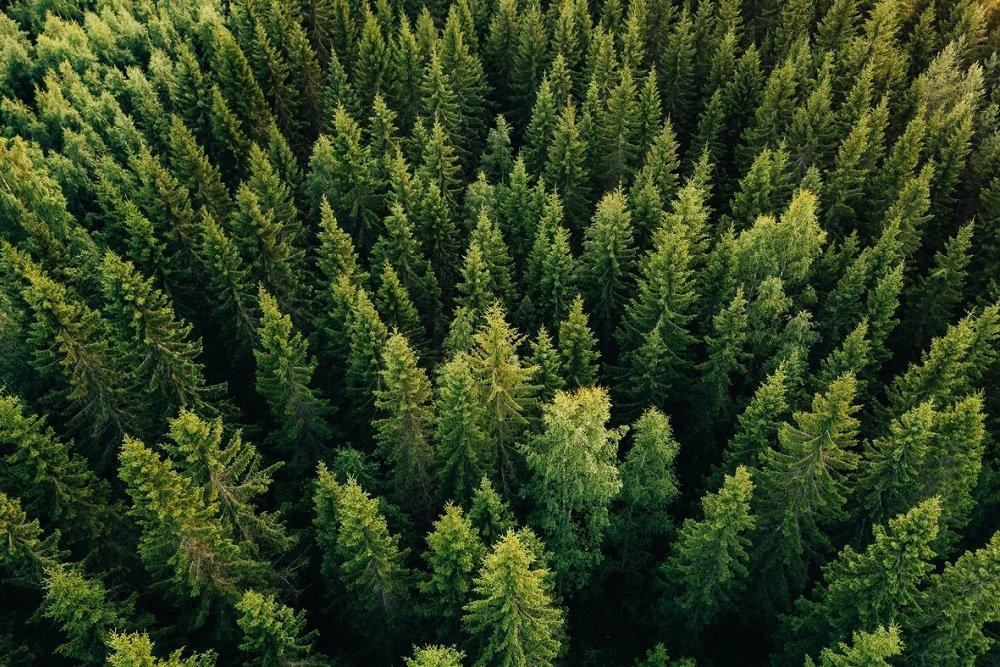 В России стартует пилотный проект по контролю над лесом из космоса