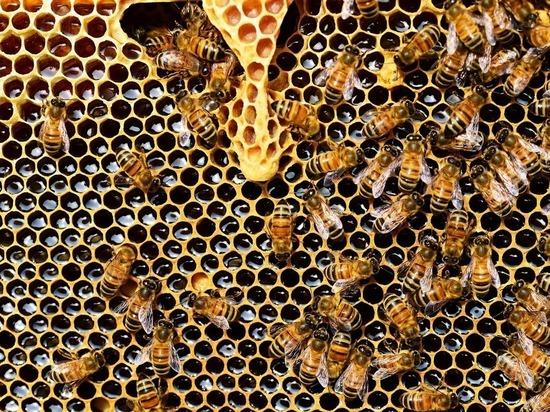 В России заговорили о переделе медового рынка после введения новых ветправил