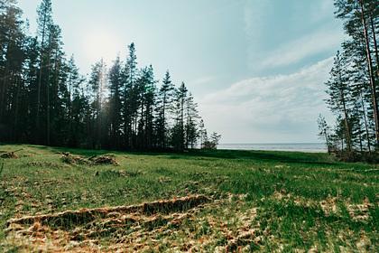 Оценено влияние строительства «Северного потока-2» на экологию