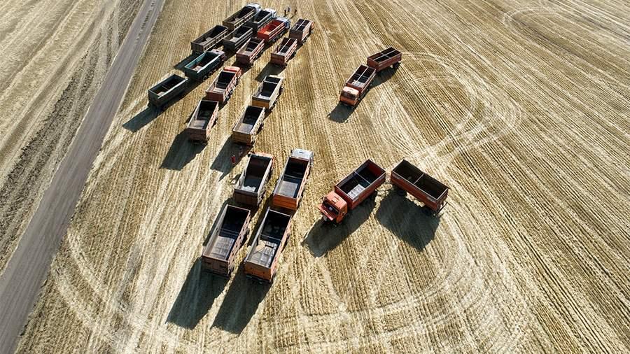 Пошлина на экспорт пшеницы из РФ с 30 июня составит $41,3 за т