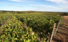 Росреестр защитит отечественное виноделие